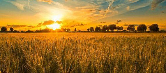 Napi evangélium – január 27. – Péntek