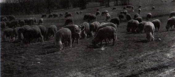 Folkklub: Vastag Richárd Bakony erdő a tanyám