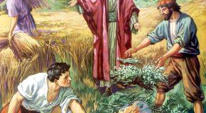 Napi evangélium – 2017. július 23. – Évközi 16. vasárnap